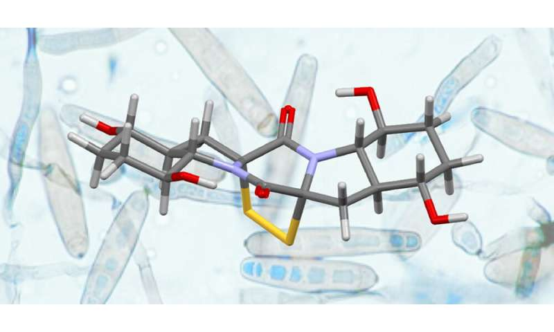 A new strategy for the synthesis of complex natural products