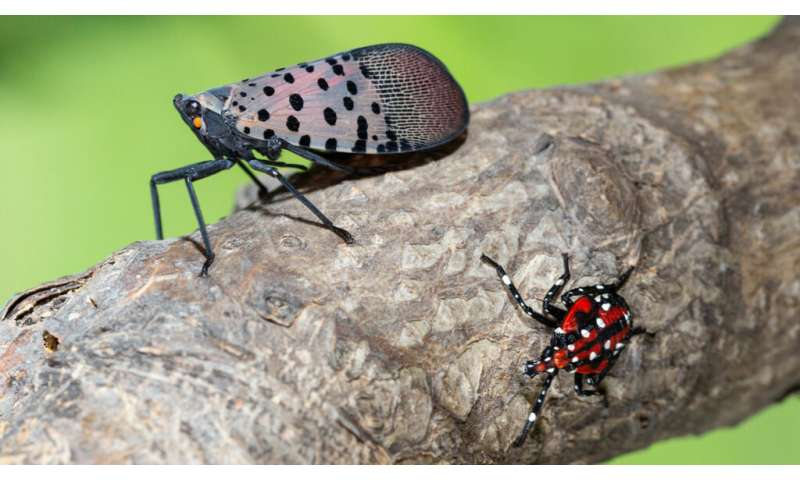 A new way to stop insect pests in their tracks