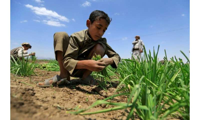 Around two-thirds of those facing severe food shortageslive in war-torn countries like Yemen