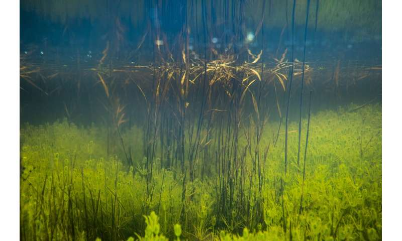 Study shows some aquatic plants depend on the landscape for photosynthesis