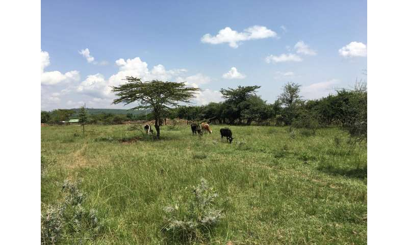 A win-win for forests and small-holder dairy farming in East Africa