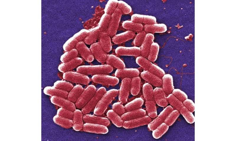 Bacteria bide their time when antibiotics attack