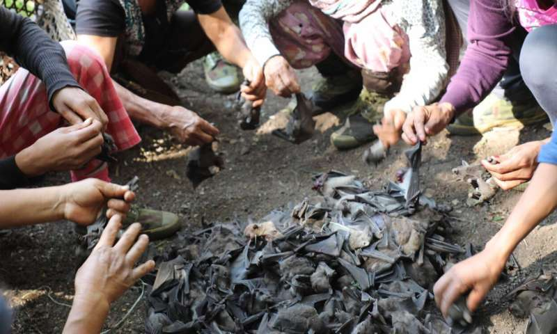 Bats in Northeast India carry filoviruses that can infect humans