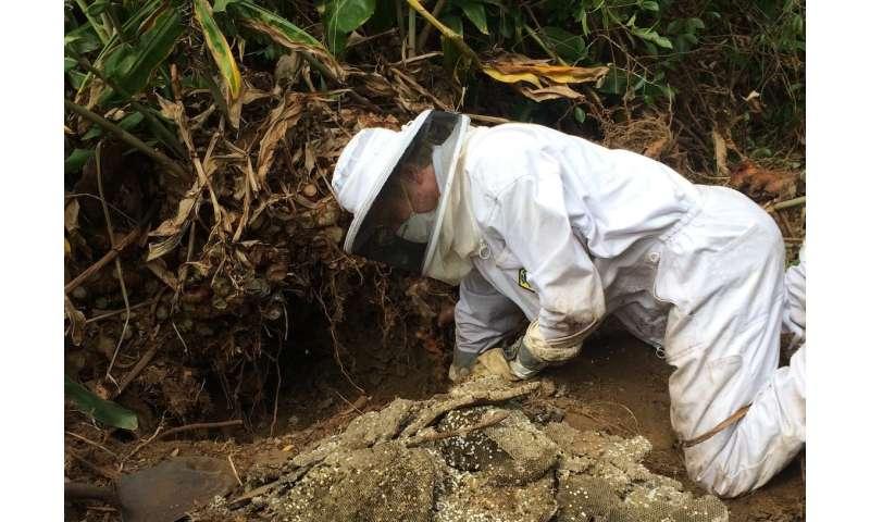Bee mite arrival in Hawaii causes pathogen changes in honeybee predators