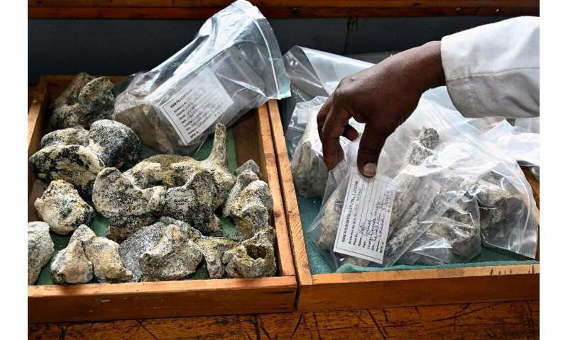 Between 7,000 and 10,000 new fossils arrive at the lab every year, according to paleontologist Job Kibii, of the Nairobi Nationa