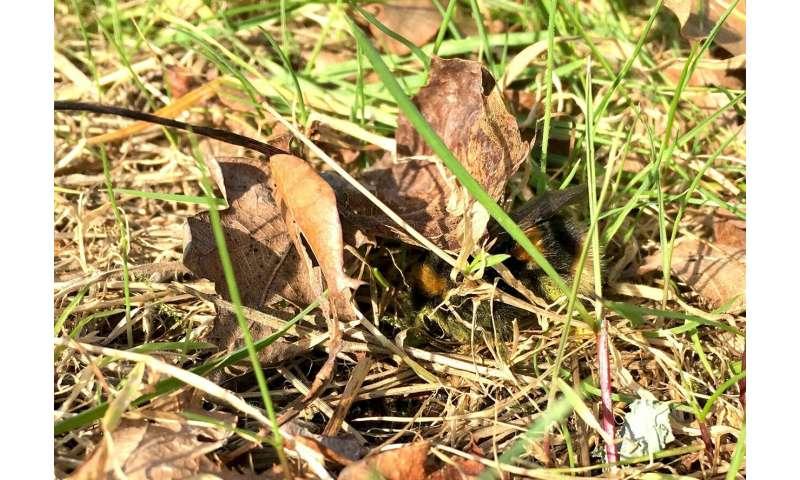 Beware of sleeping queens underfoot this spring