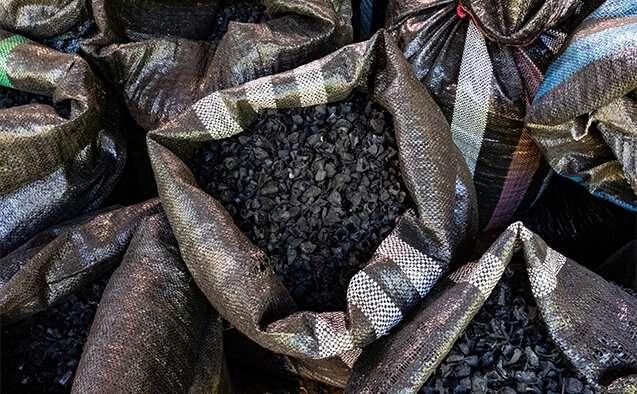 Biochar: un mejor comienzo para la restauración de la selva tropical