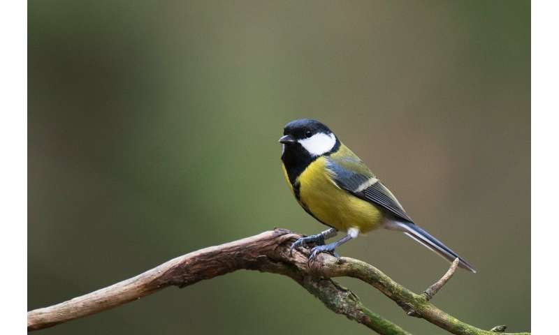 Bird immune systems reveal harshness of city life