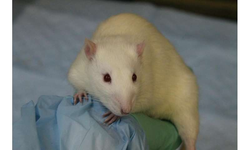 Brain circuit controls individual responses to temptation in rats