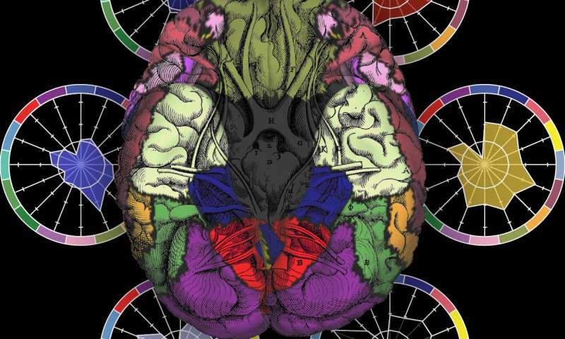 Brain researchers seek 'fingerprints' of severe mental diseases