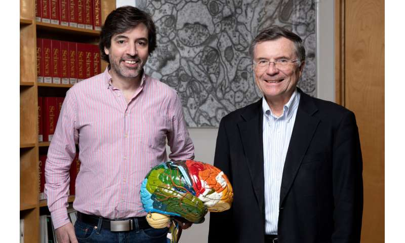 Brain's astrocytes play starring role in long-term memory