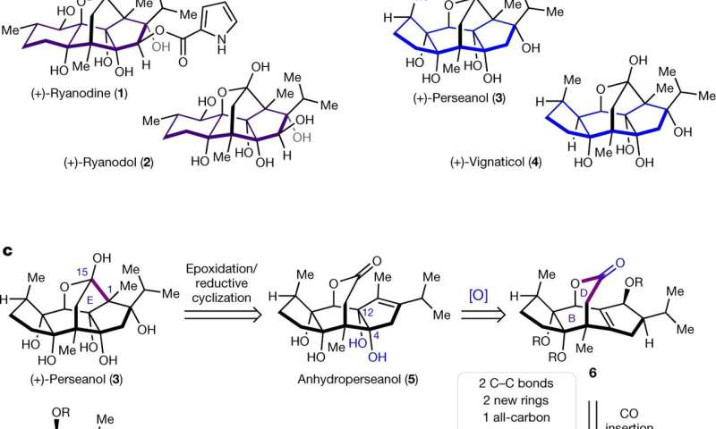 Chemists synthesize perseanol for the first time
