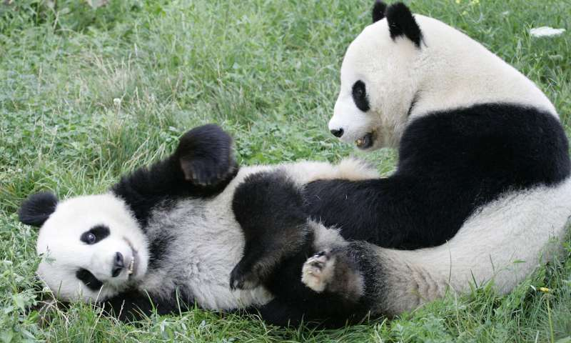 Chinese official hands over new panda to Vienna zoo