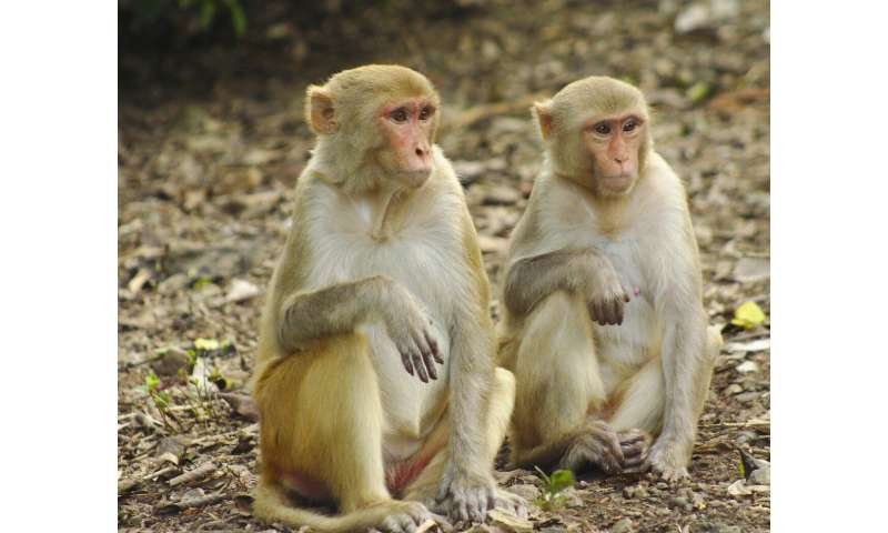 Close friends help macaques survive