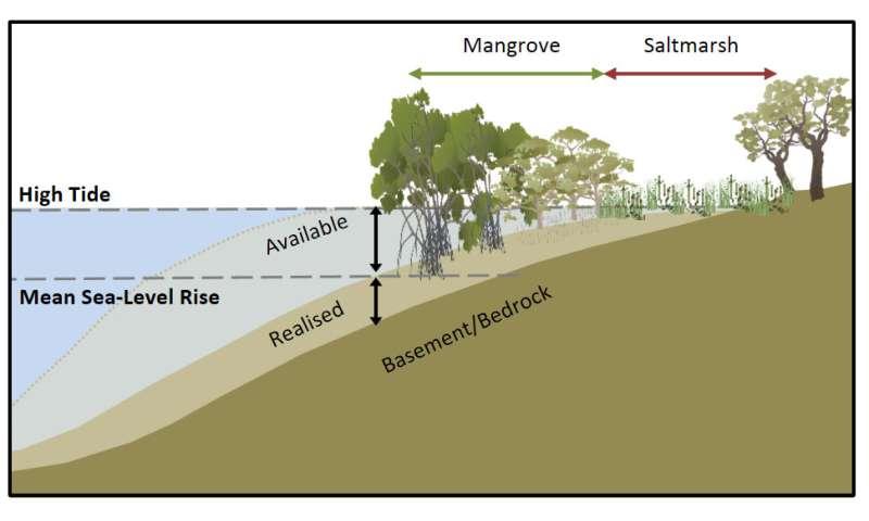 Coastal wetlands capture more carbon as seas rise