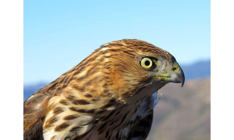 Colapso de las poblaciones de aves del desierto probablemente debido al estrés por calor debido al cambio climático