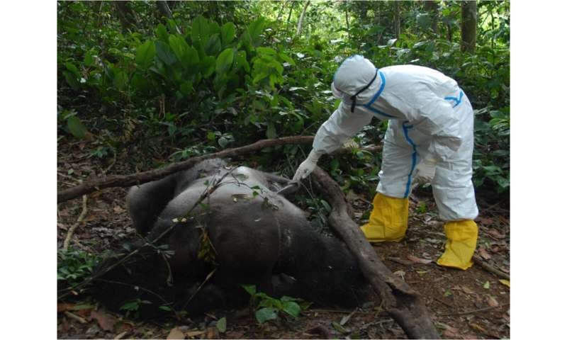 Community-based wildlife carcass surveillance is key for early detection of Ebola virus