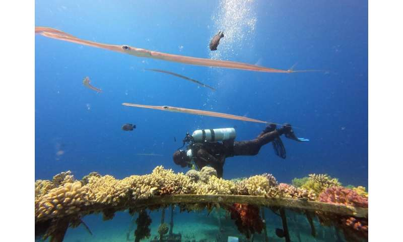 Coral are a protected species under Israeli law and the Nature and Parks Authority has been tasked with their relocation