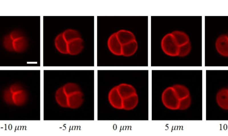 Bringing faster 3-D imaging for biomedical researches