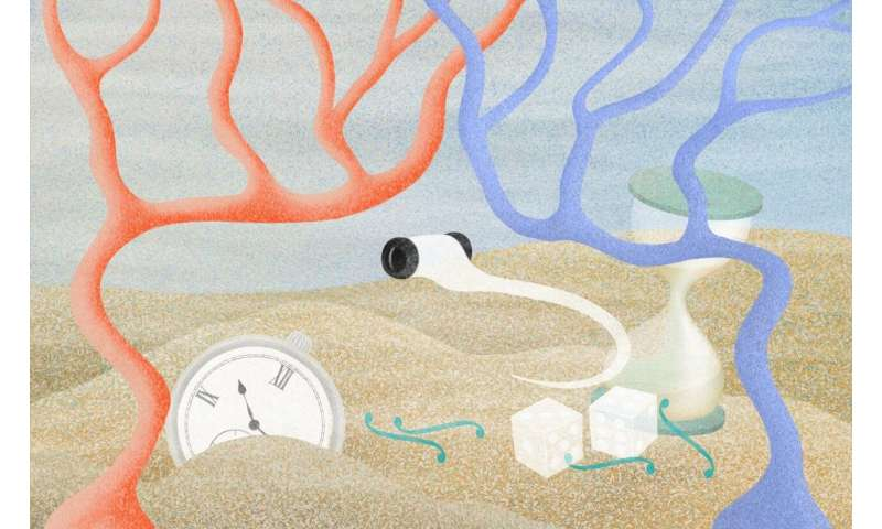 Decision-making process becomes visible in the brain