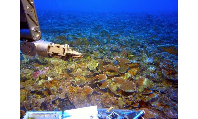 Deep submersible dives shed light on rarely explored coral reefs