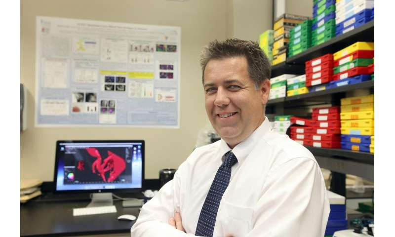 Defective cilia linked to heart valve birth defects