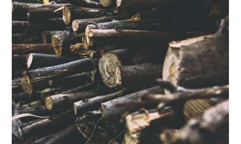 Conservation Africa News - deforestation
