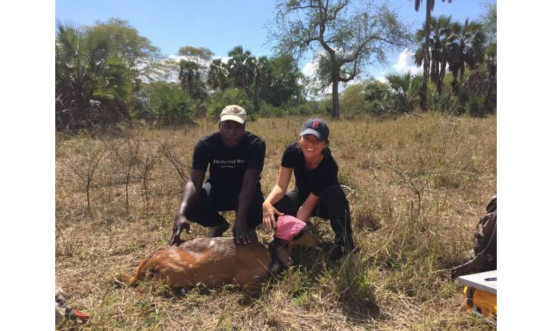 Ecologists find a 'landscape of fearlessness' in a war-torn savannah