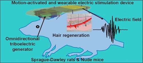 Electric tech could help reverse baldness
