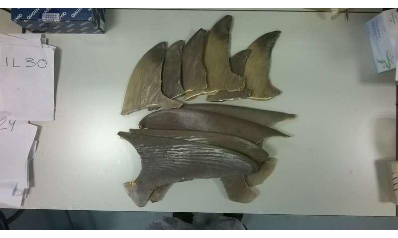 Endangered sharks being eaten in UK