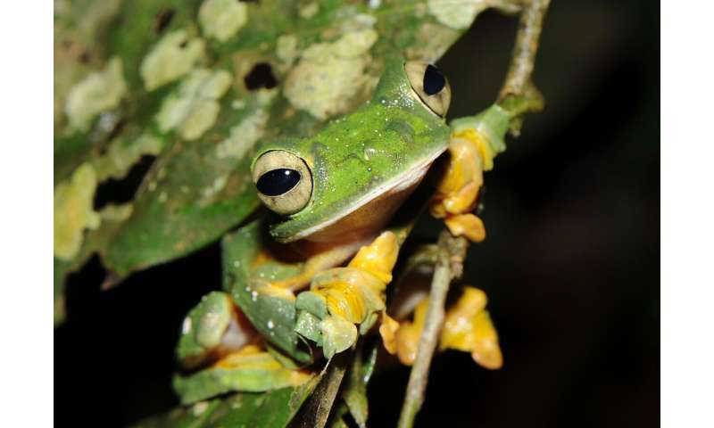 Even more amphibians are endangered than we thought