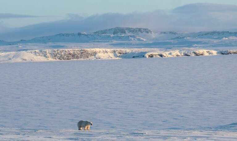 Experts think a recent invasion by polar bears of a Russian village in the Arctic was due to the late freezing of the sea that p