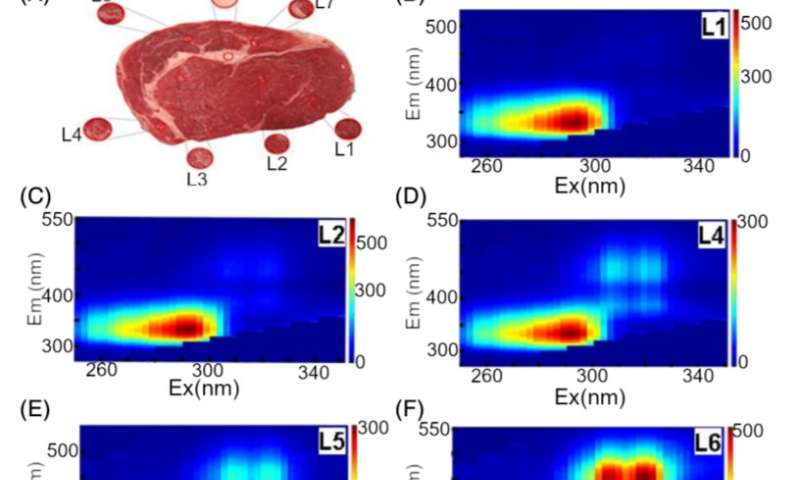 Fluorescence spectroscopy helps to evaluate meat quality