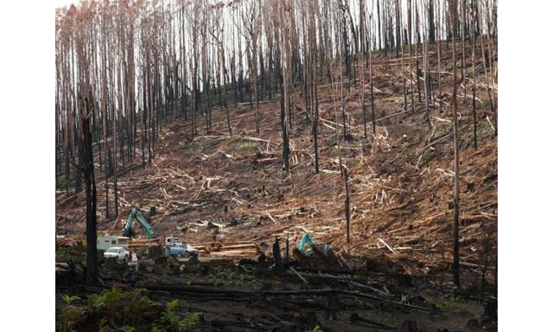 Forest soil needs decades or centuries to recover from fires and logging