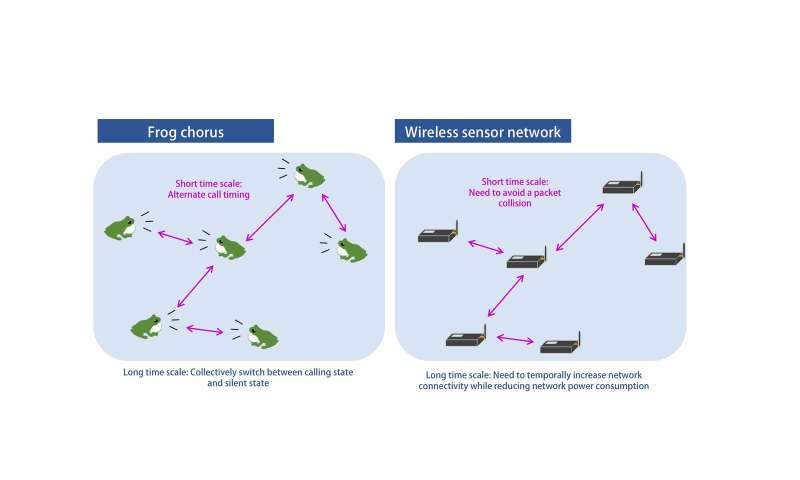 Frog choruses inspire wireless sensor networks