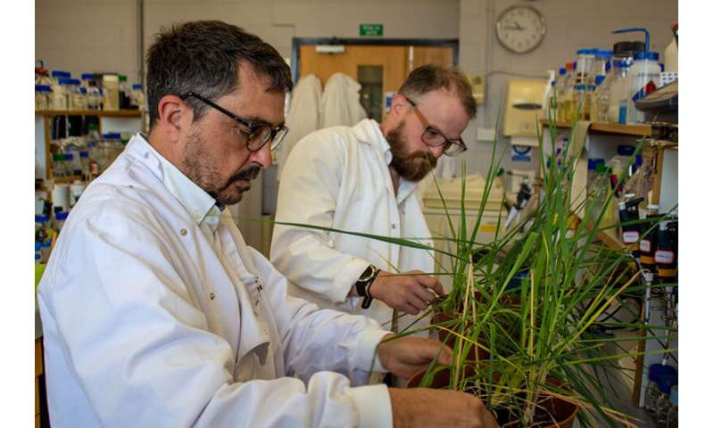 Future-proofing cereals for climate change drought conditions