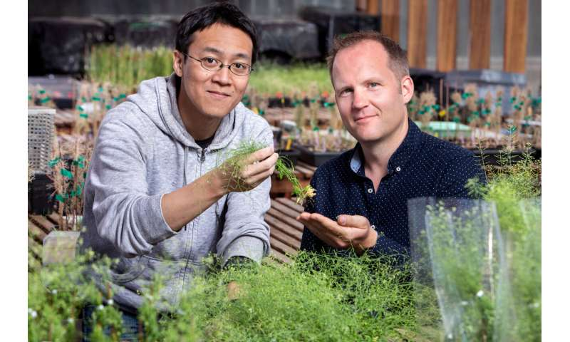 Gene identified that will help develop plants to fight climate change