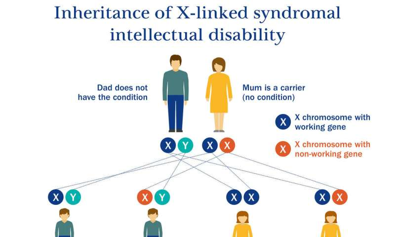 Genetic defect causing intellectual disability discovered by Sussex scientists