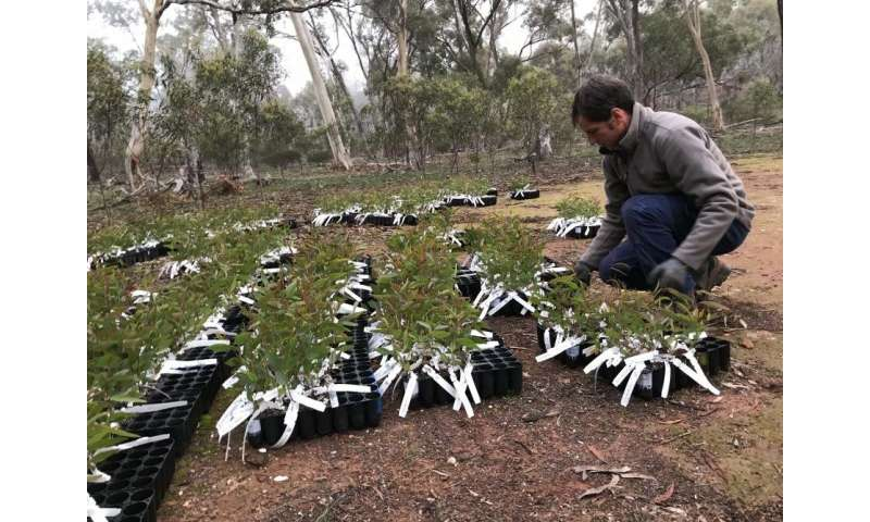 Getting revegetation right with genetics