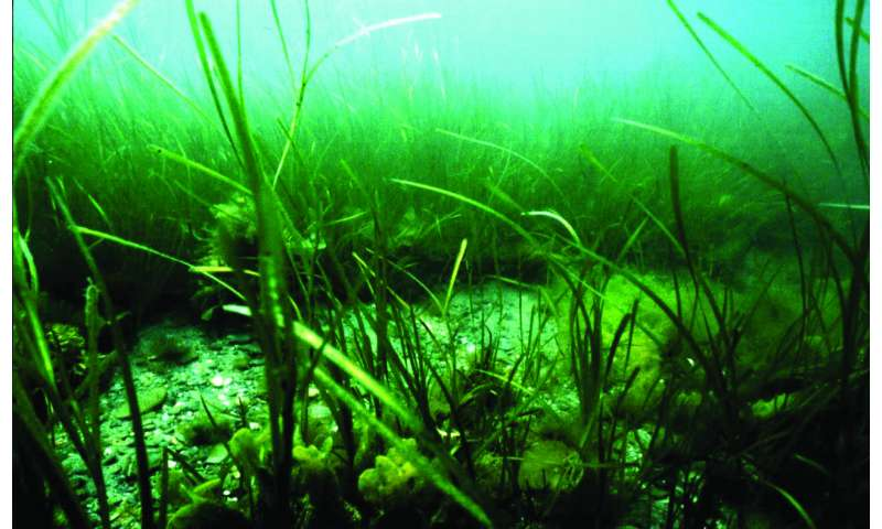 Getting to the core of underwater soil