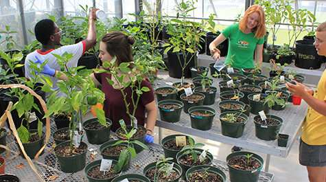 Greenhouse uses predatory insects for pest control