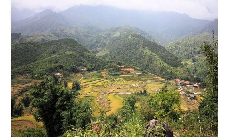 El consorcio de investigación dirigido por HHU quiere eliminar las peligrosas enfermedades de las plantas en el arroz