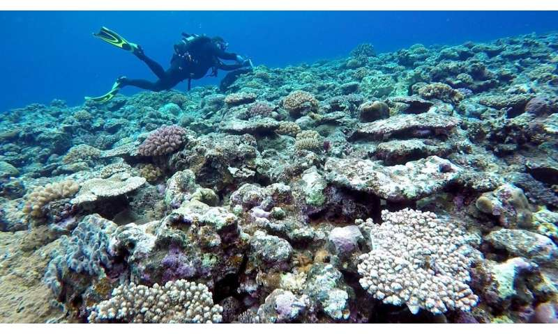 HKUST researchers shed light on modulation of thermal bleaching of coral reefs by internal waves