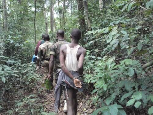 How to fight illegal cocoa farms in Ivory Coast