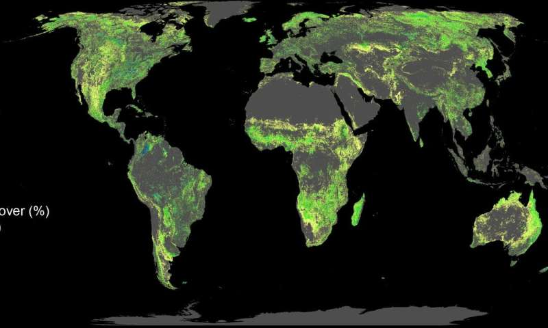 Best way to fight climate change? Plant a trillion trees