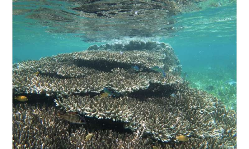 How underwater plants and corals can help animals survive marine heatwaves