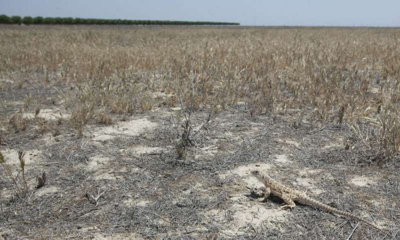 Idled farmland presents habitat restoration opportunities in San Joaquin Desert