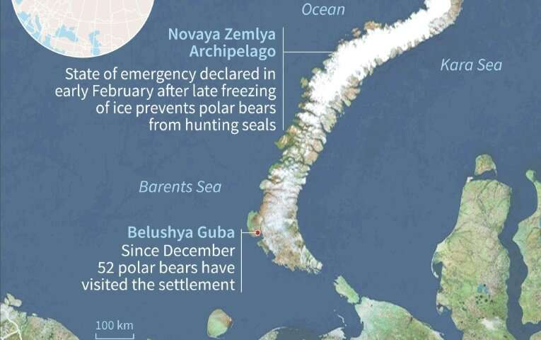 In the Novaya Zemlya archipelago, climate change and new infrastructure projects are bringing humans and polar bears into confli