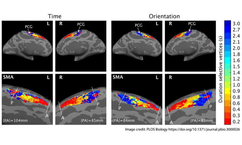 Link between music and speech rhythm in brain could provide language insight