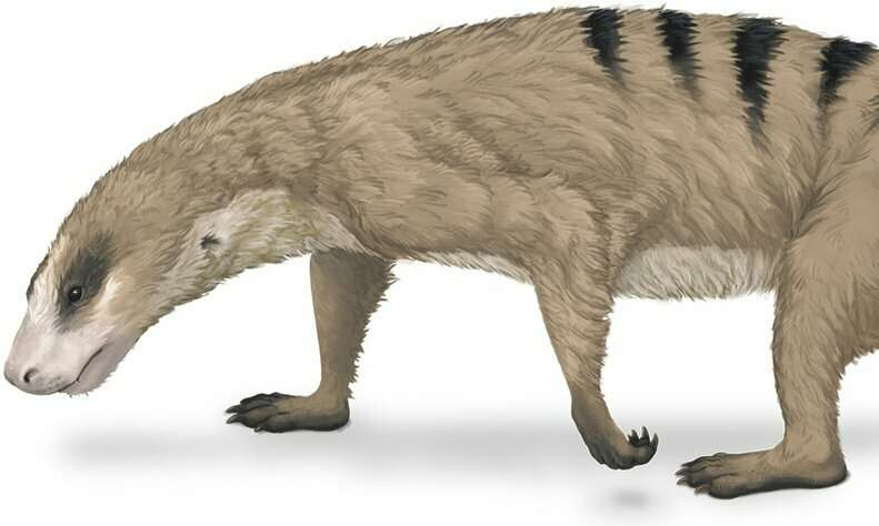 Mammals' unique arms started evolving before the dinosaurs existed